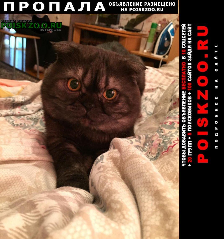 Пропал кот шотландский вислоухий Барнаул