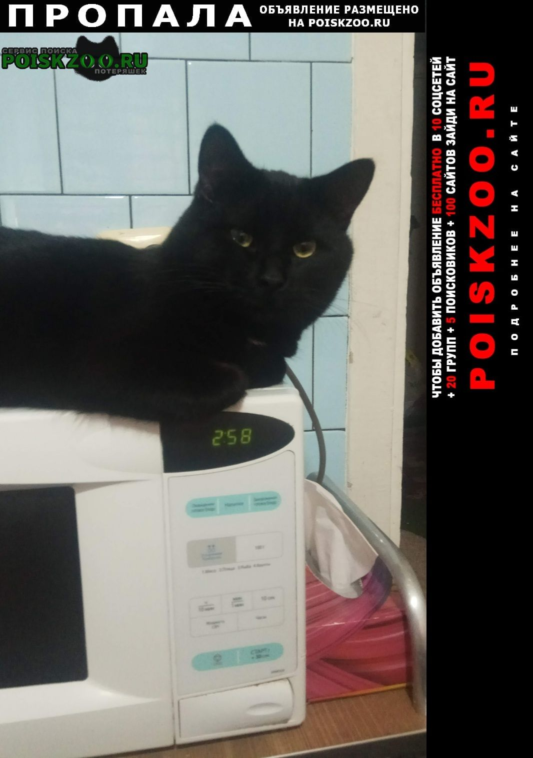 Красноармейск Пропал кот помогите пожалуйста найти