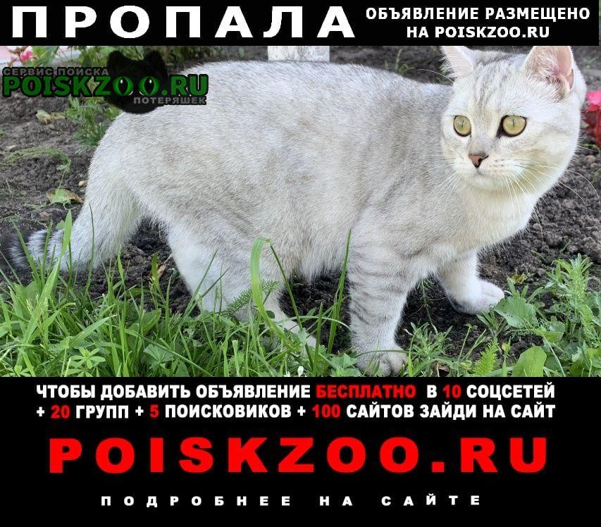Пропал кот деревня панино Бронницы