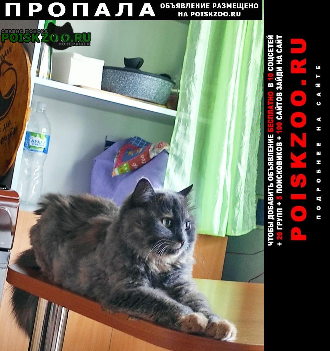 Новочебоксарск Пропала кошка