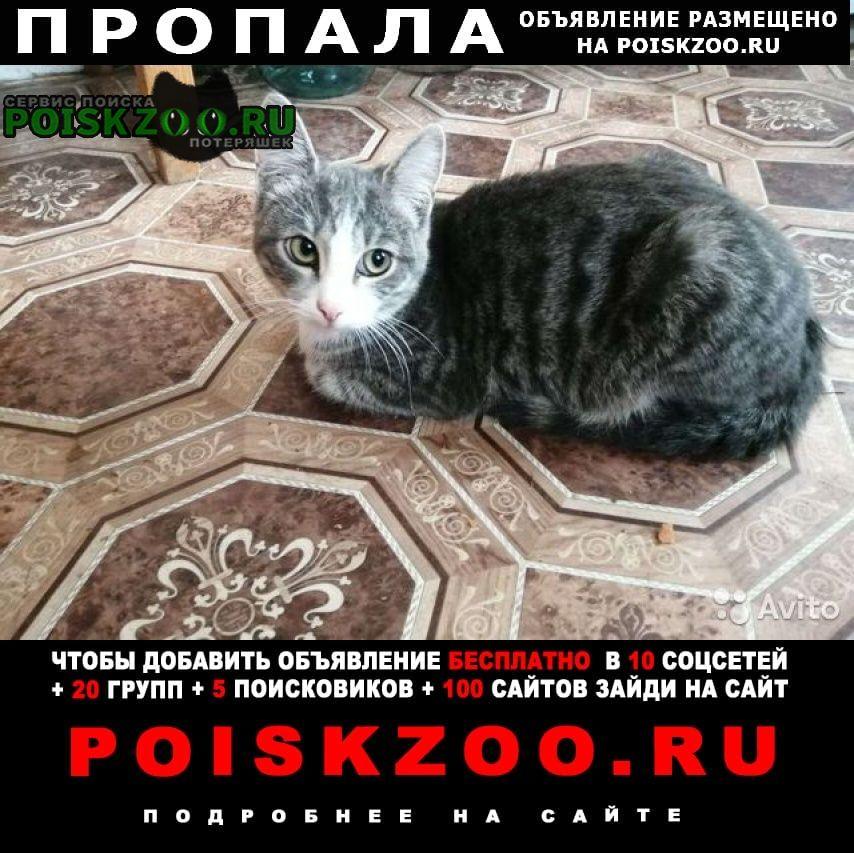 Екатеринбург Пропал кот гражданская 2 полосатый