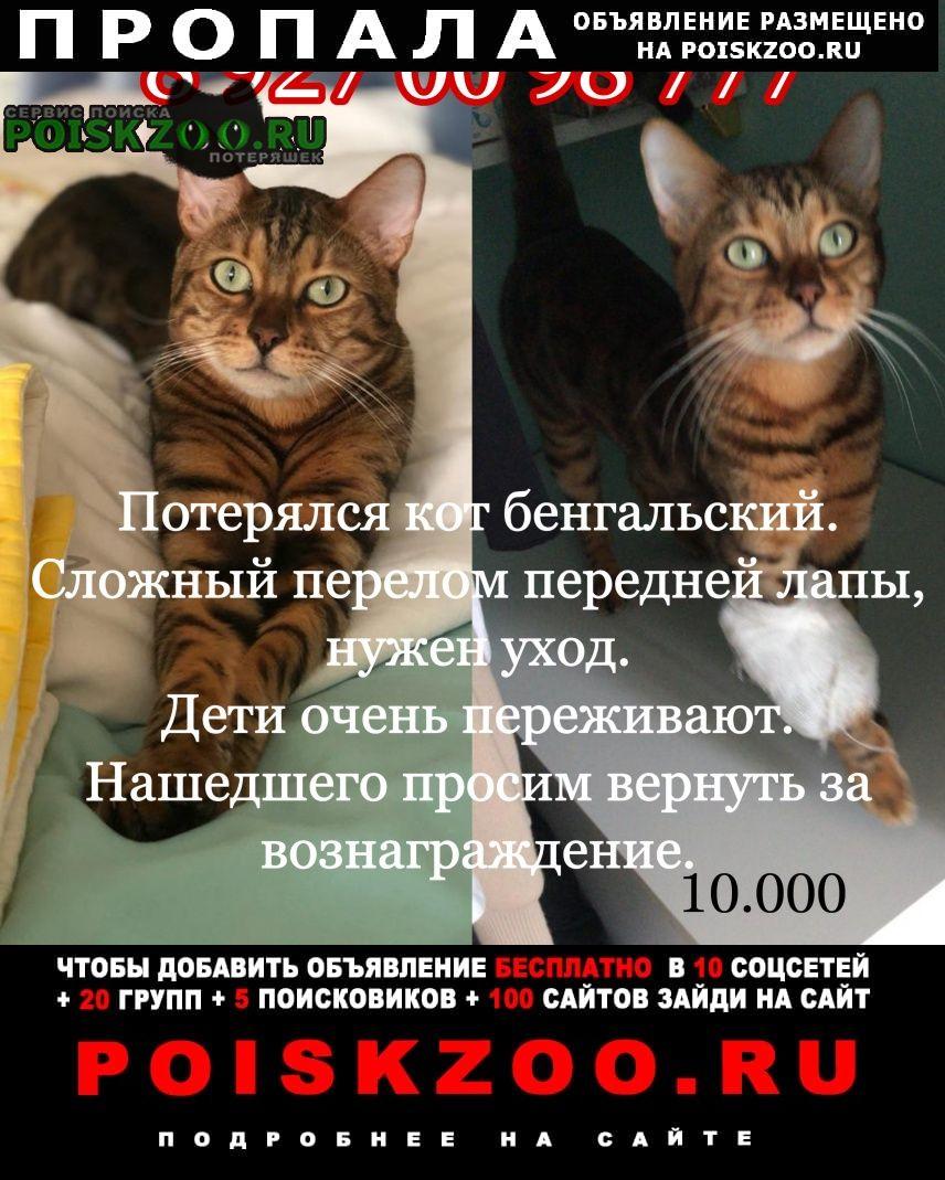 Самара Пропала кошка кот бенгал