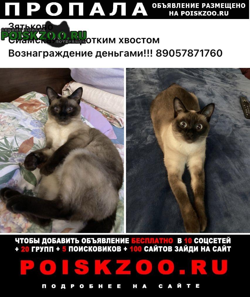 Талдом Пропала кошка деревня зятьково