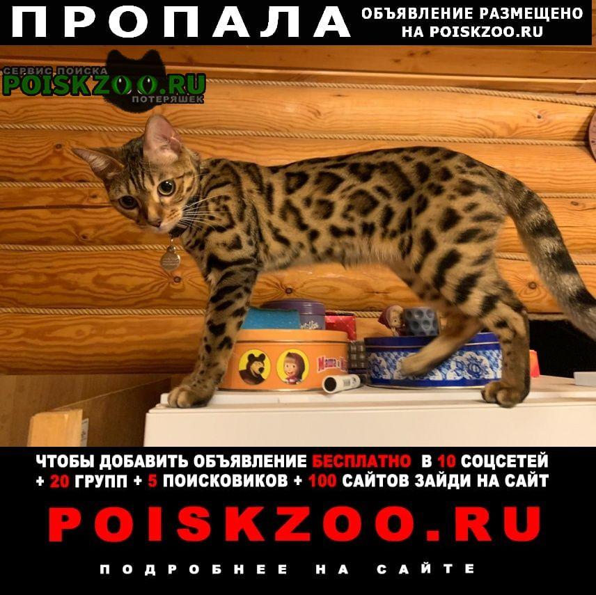 Фрязино Пропала кошка вознаграждение