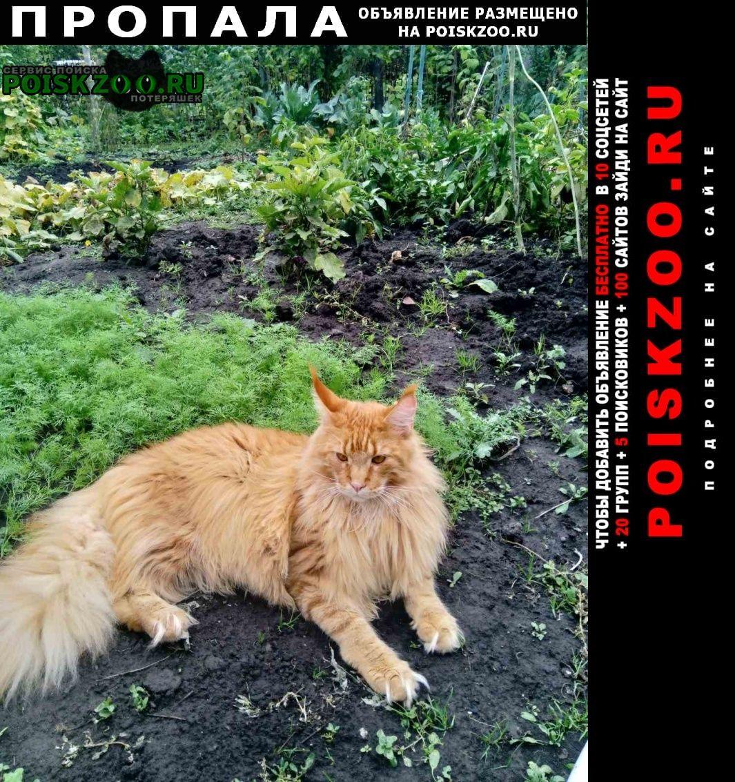 Ульяновск Пропал кот рыжий.