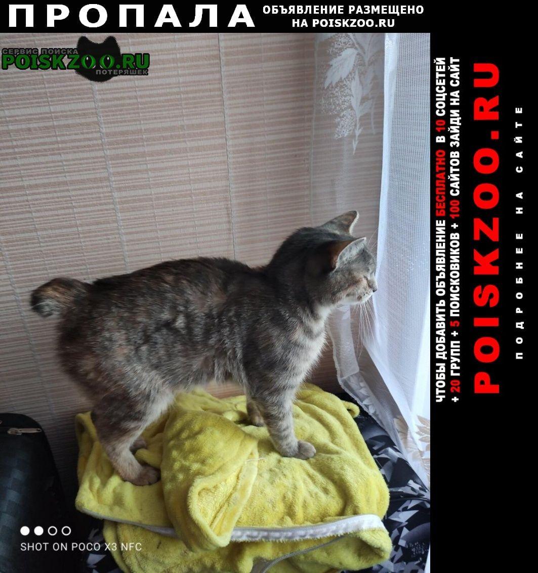 Пропала кошка кошечка, зовут игорёк. без хвост Орехово-Зуево