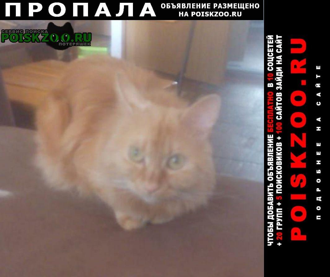 Пропал кот, рыжий курильский-бобтейл Москва