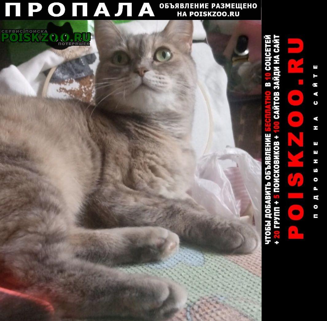 Москва Пропала кошка южное бутово