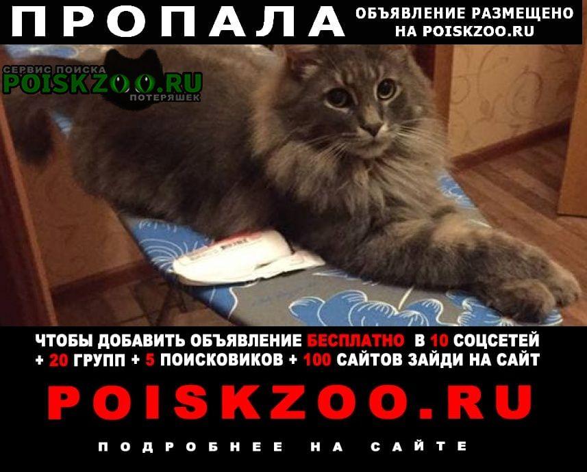 Стерлитамак Пропал кот мейн кун 31 авг. на рутмана