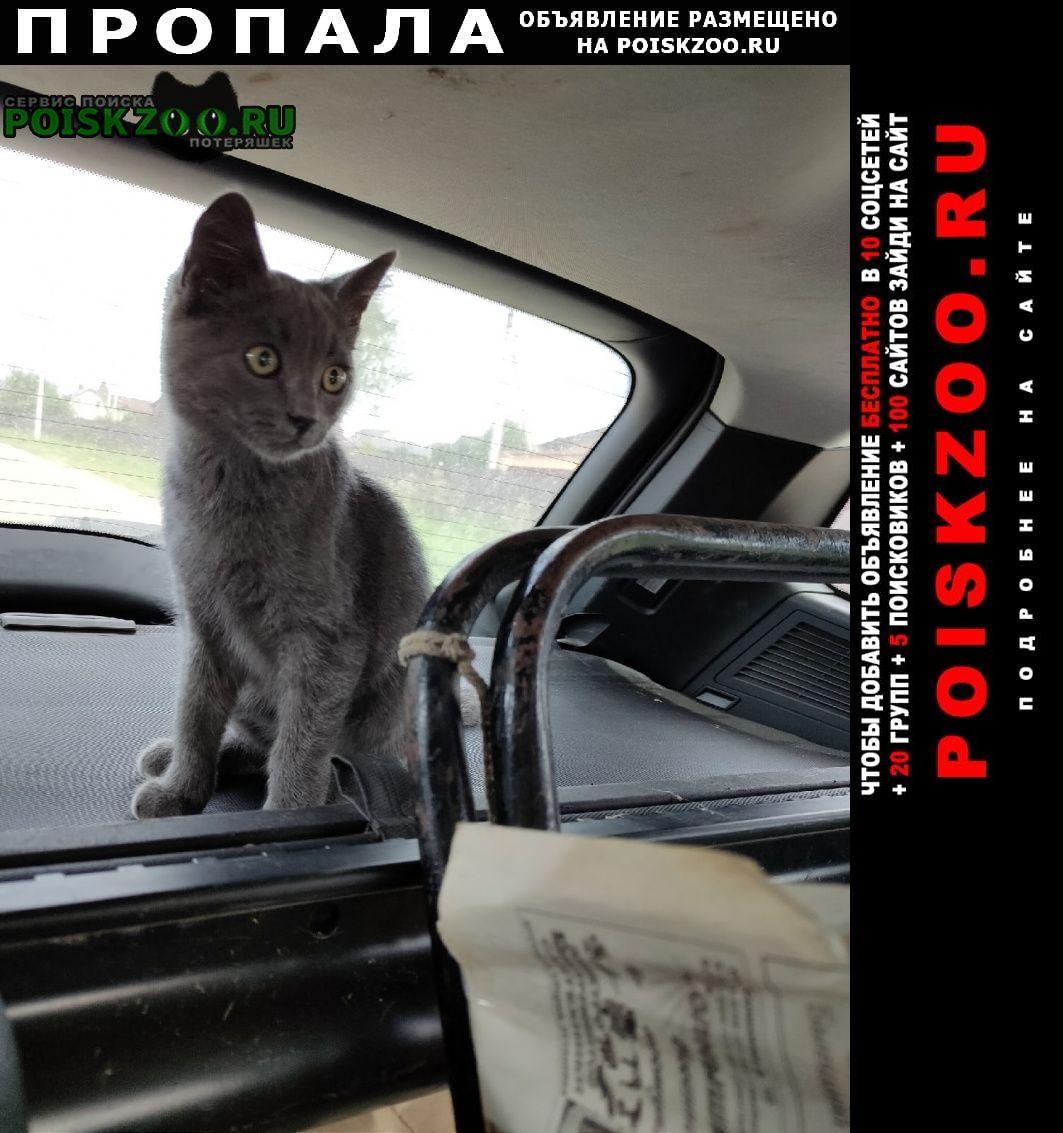 Пропал кот Навля