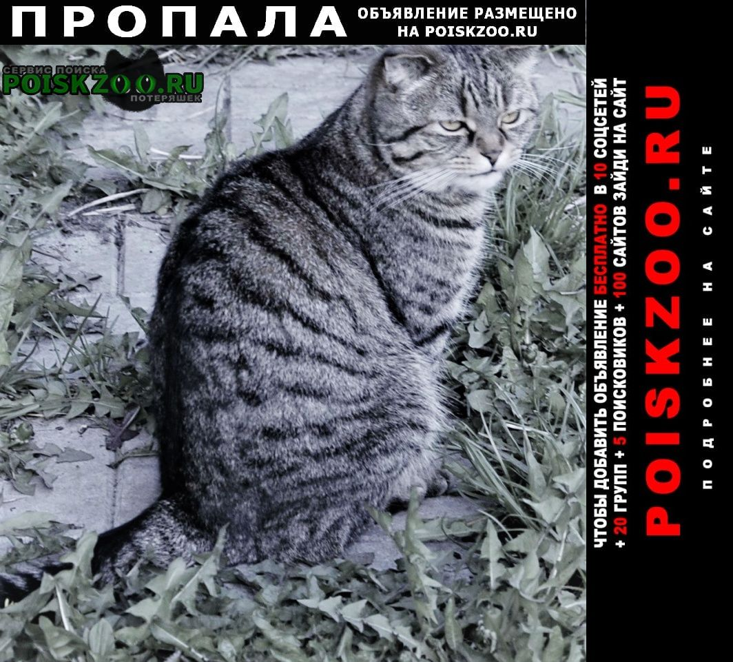 Москва Пропала кошка маруся потерялась