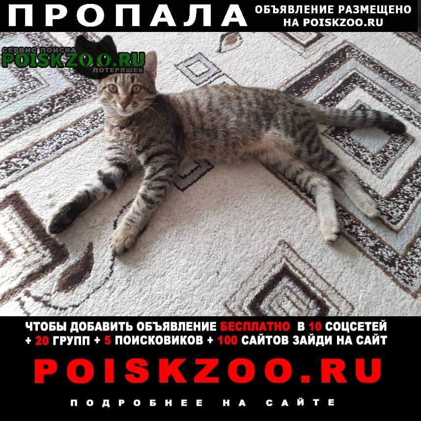 Астрахань Пропал кот помогите найти нашего а