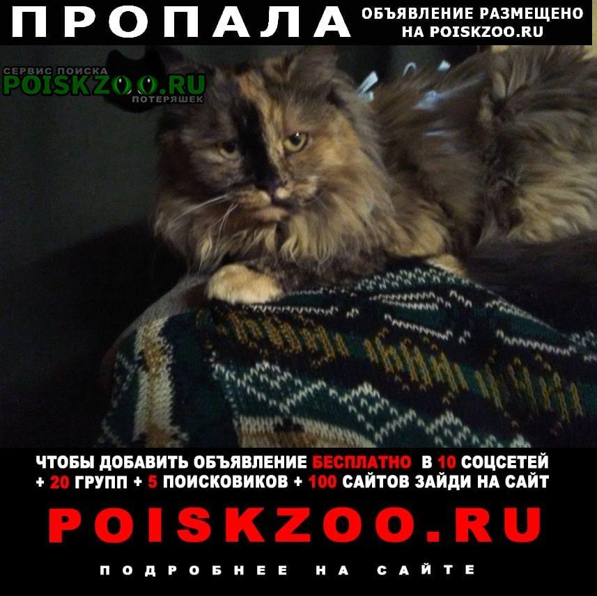 Нахабино Пропала кошка