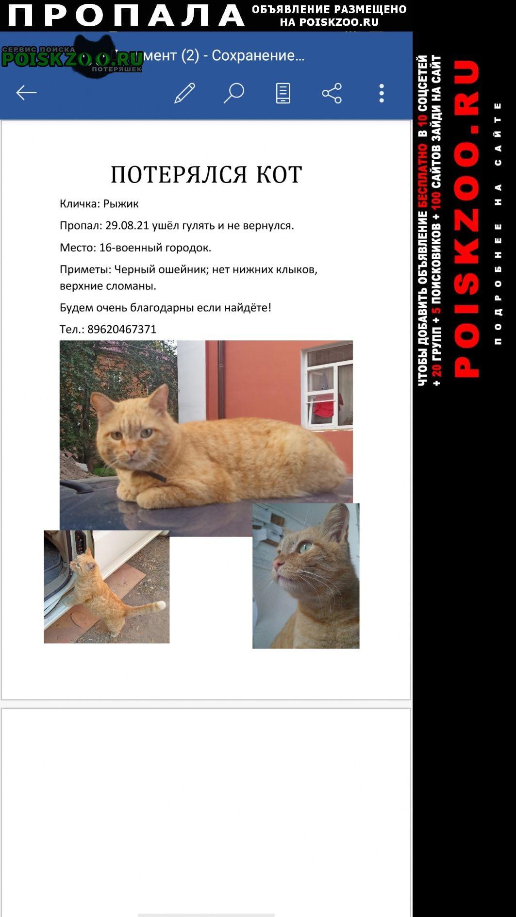 Омск Пропал кот рыжик