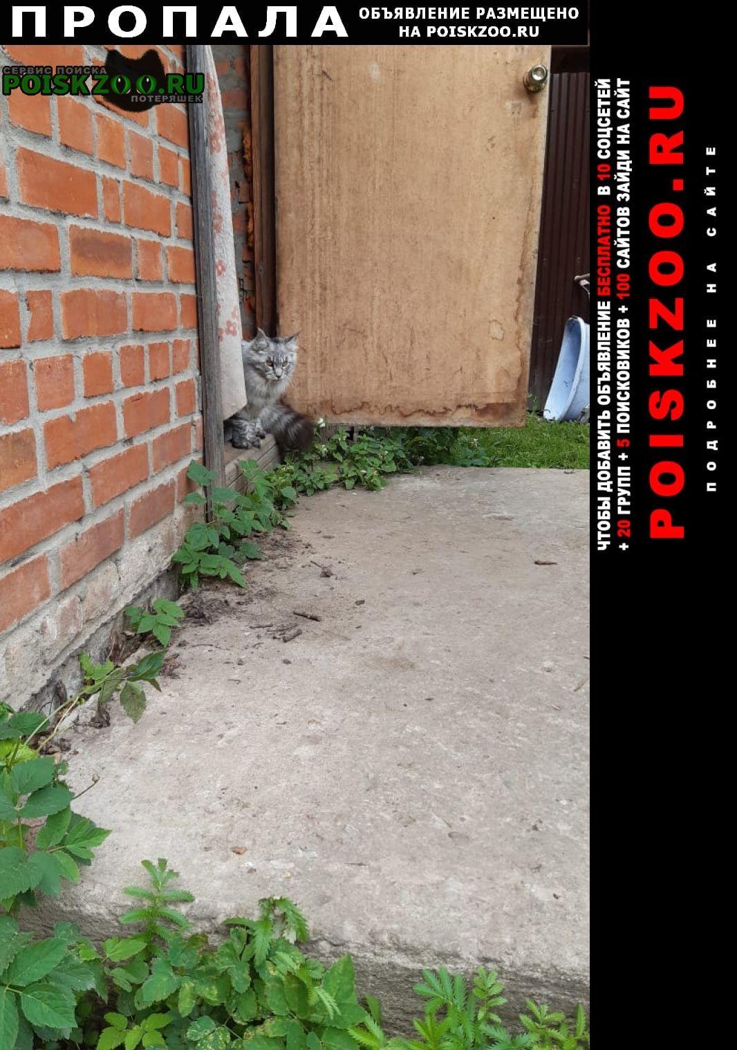 Пропала кошка вознаграждение нашедшему Балашиха