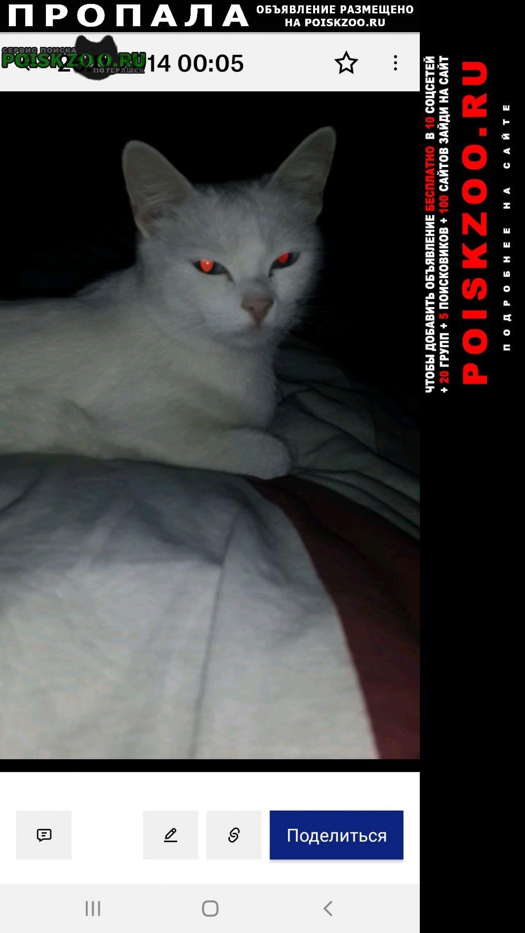 Бронницы Пропала кошка альбинос.