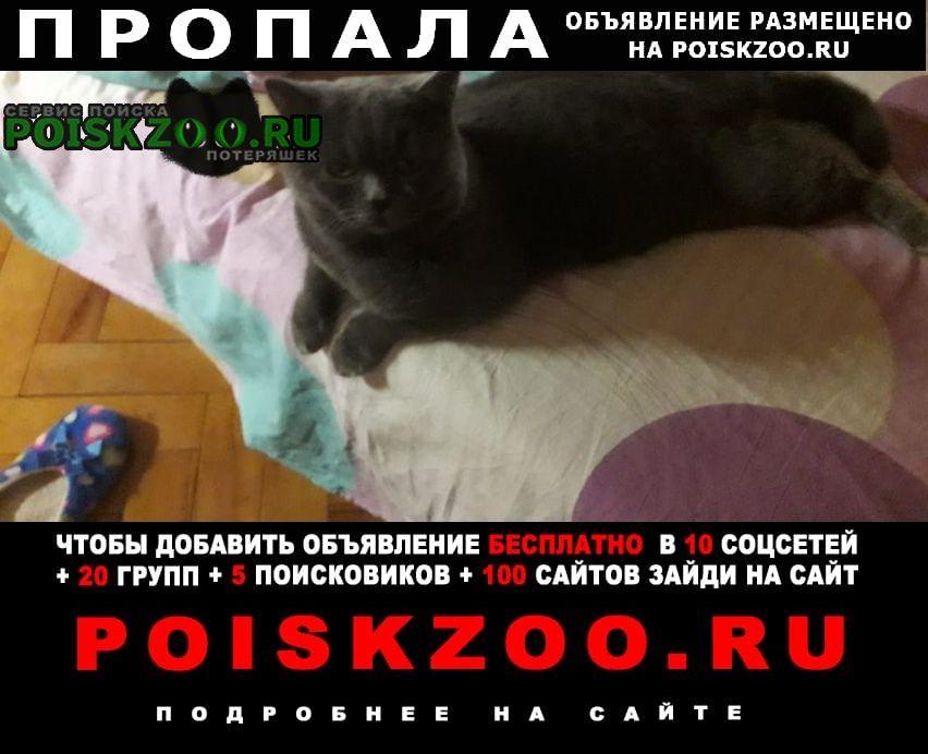 Пропал кот брит. породы, наш любимец Москва