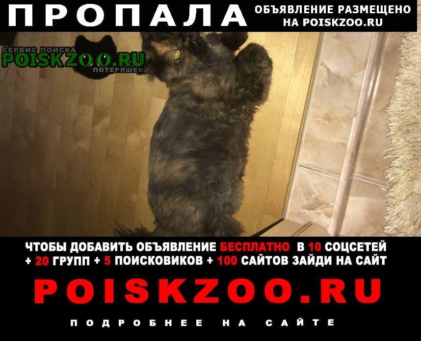 Пропала кошка по кличке даня Москва