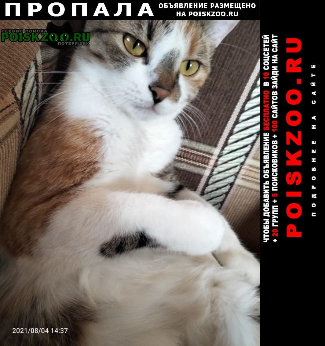 Пропала кошка авиагородок улица ильюшина д11к4 Домодедово