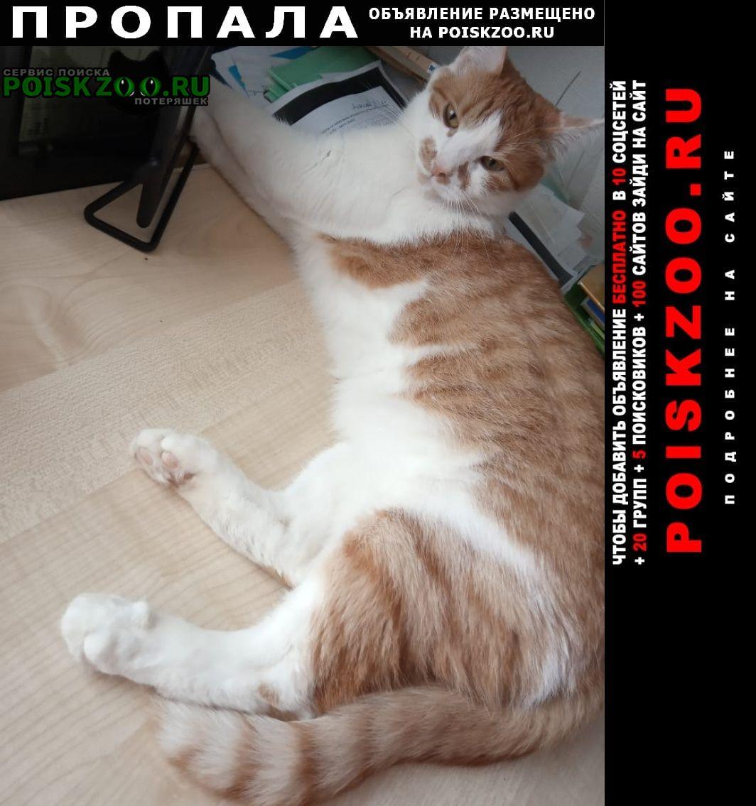 Пропал кот Тверь