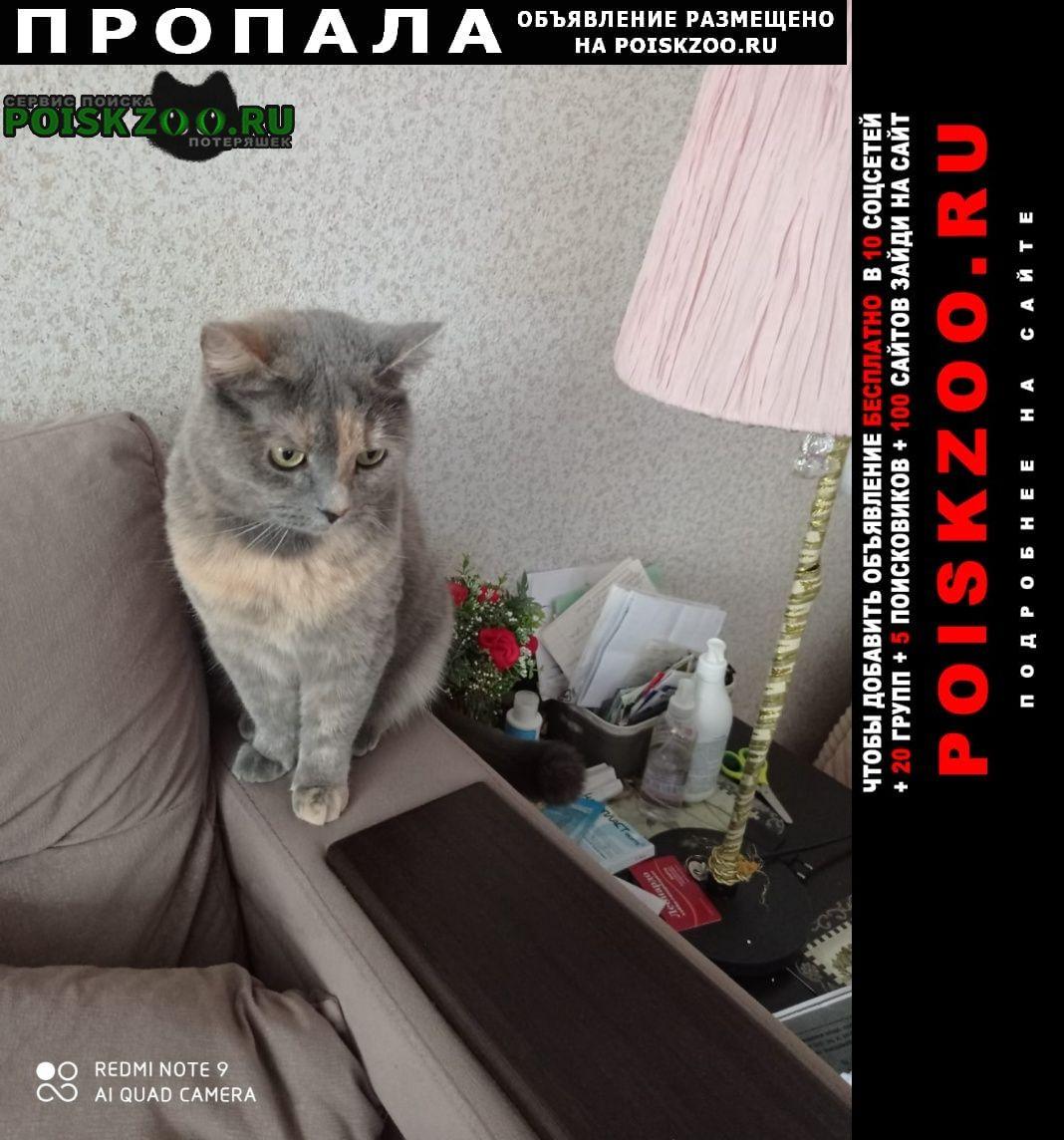 Пропала кошка 25 августа д. петровское. Бронницы