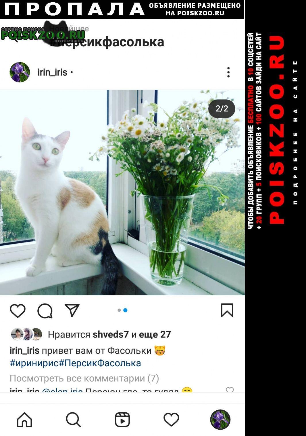 Жуковский Пропала кошка