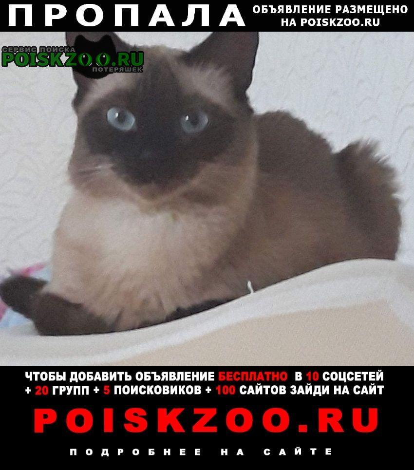 Смоленск Пропала кошка сиамская