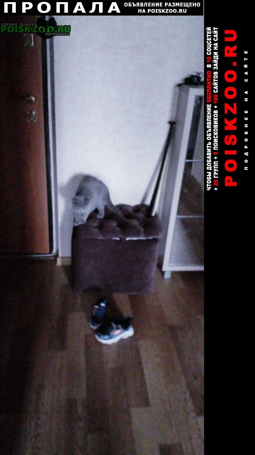 Набережные Челны Пропал котёнок возраст три месяца прошу