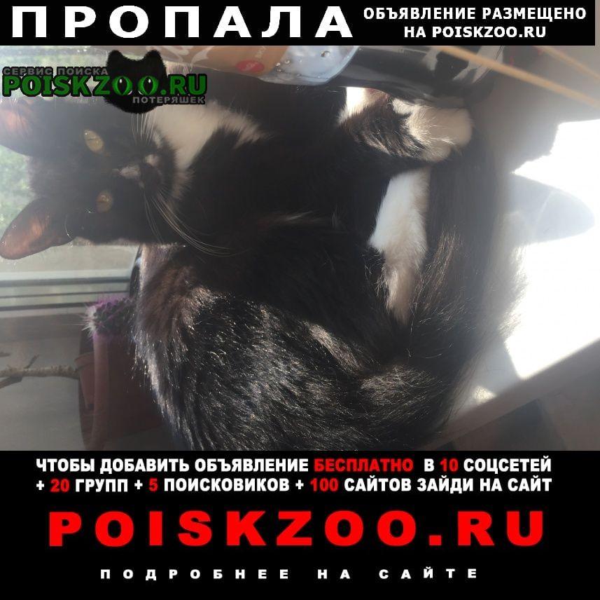 Омск Пропала кошка