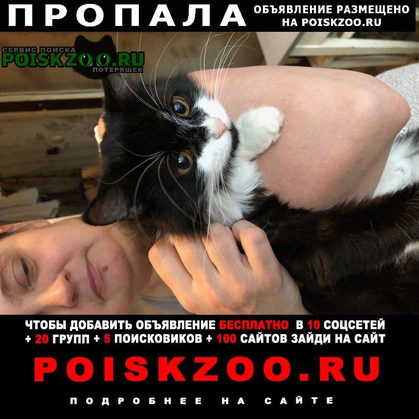 Пропала кошка Щербинка