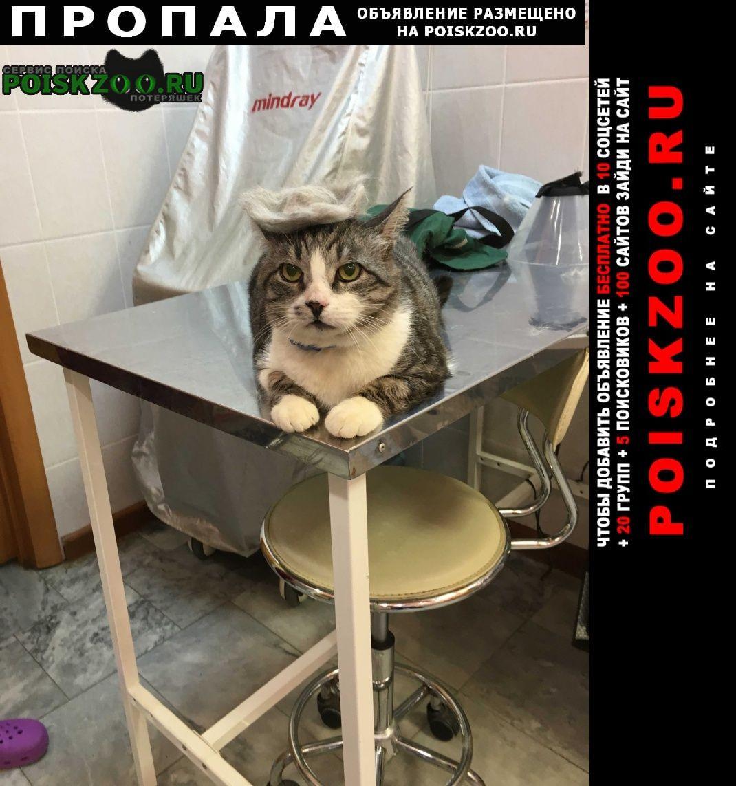 Нижний Новгород Пропал кот