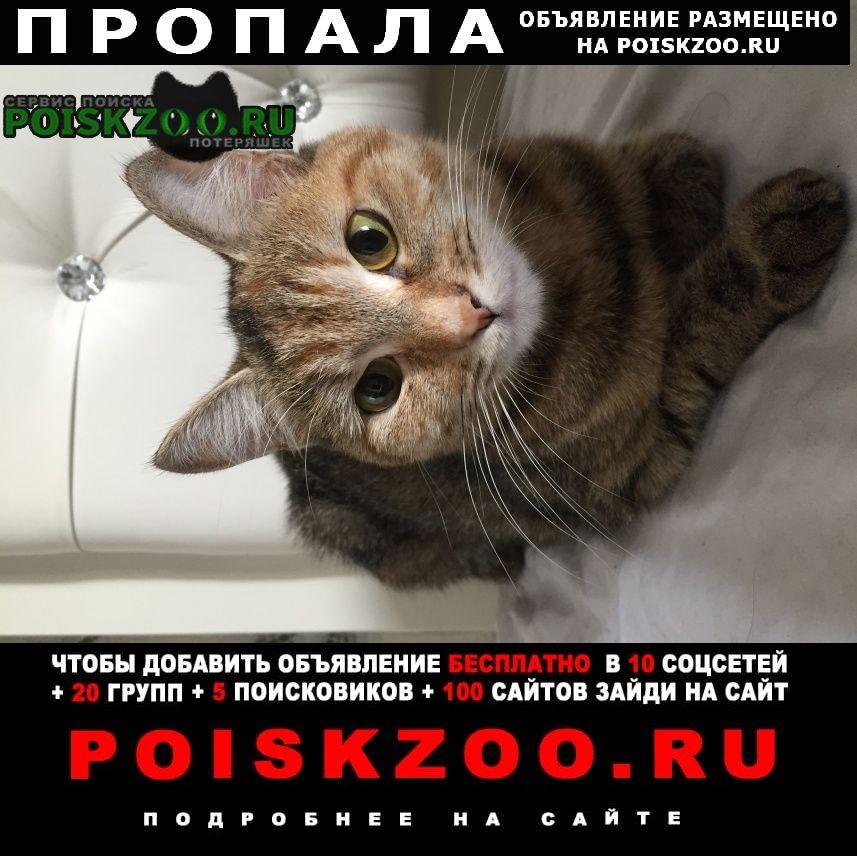Новосибирск Пропала кошка миниатюрная черепахового окраса