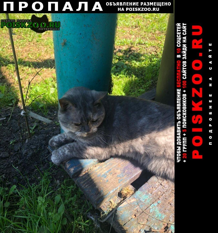 Пропала кошка 9 сентября 2021года южное бутово Москва