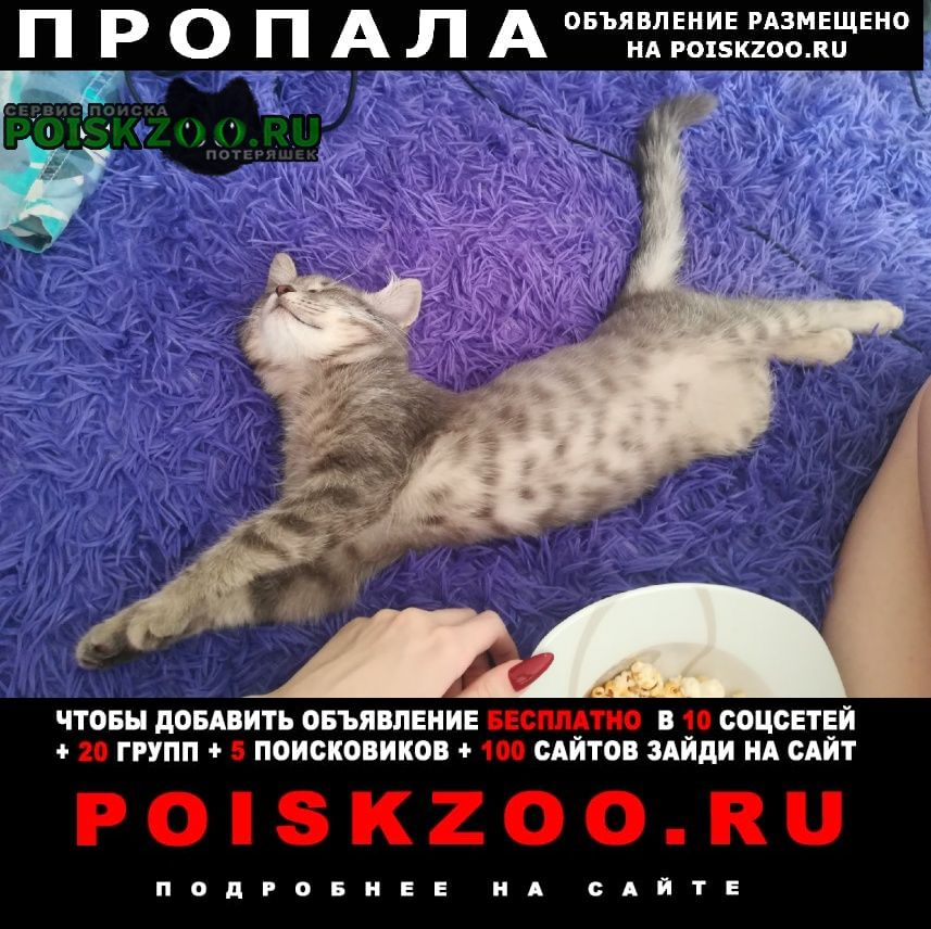 Пропал кот Воронеж
