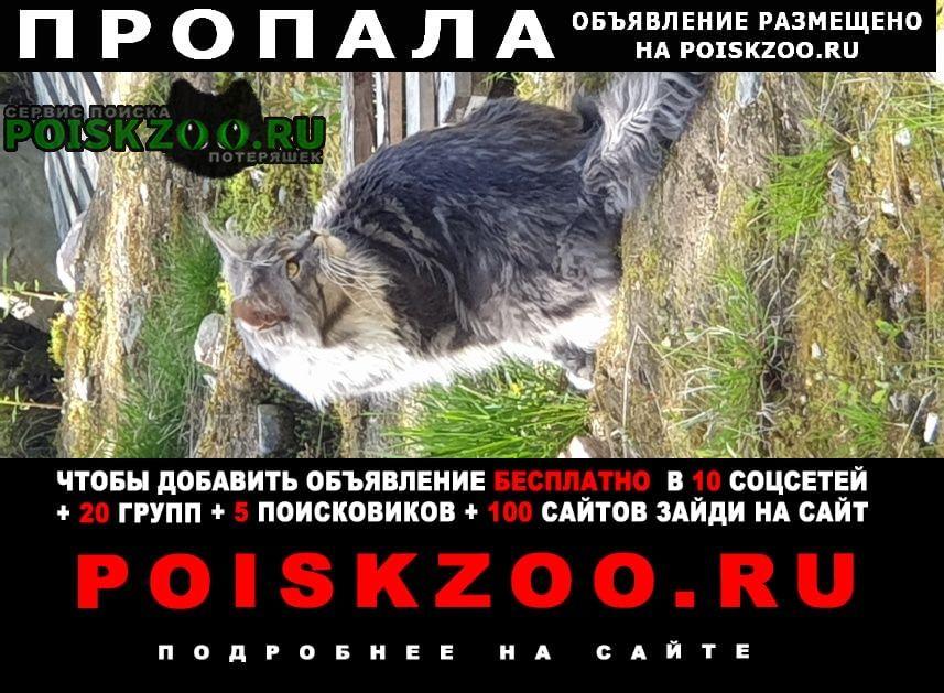 Пропал кот друг, мейн кун Мурманск