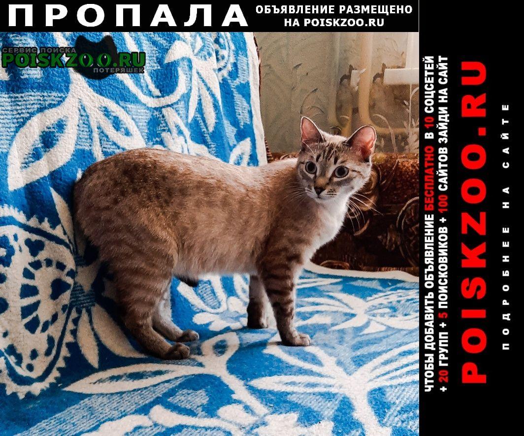 Томск Пропал кот