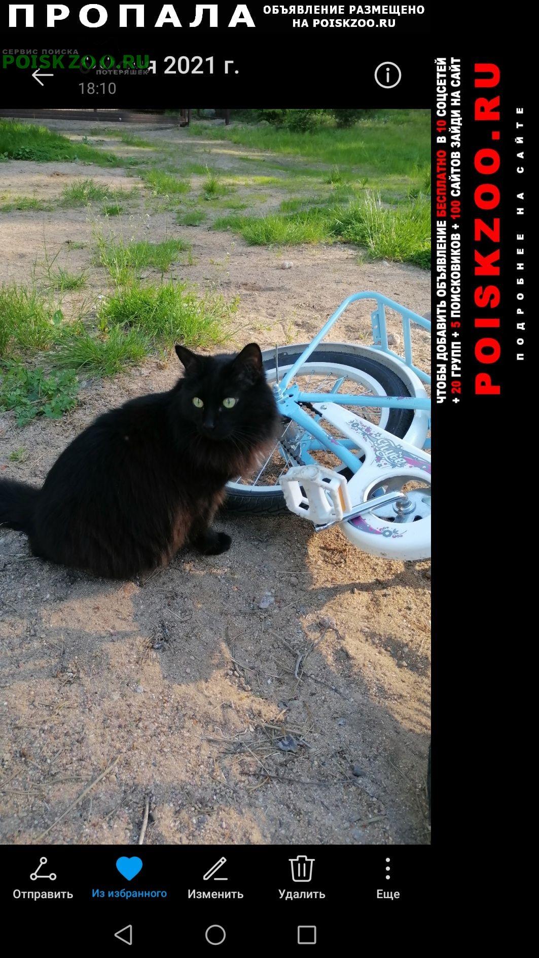 Пропал кот 12 лет Выборг