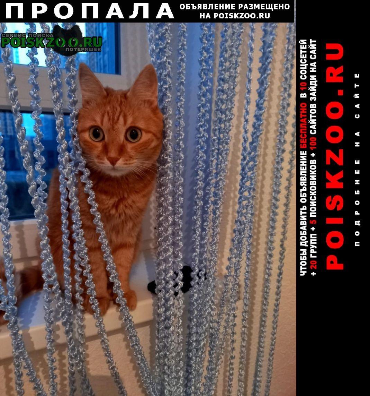 Пропал кот рыжий Екатеринбург