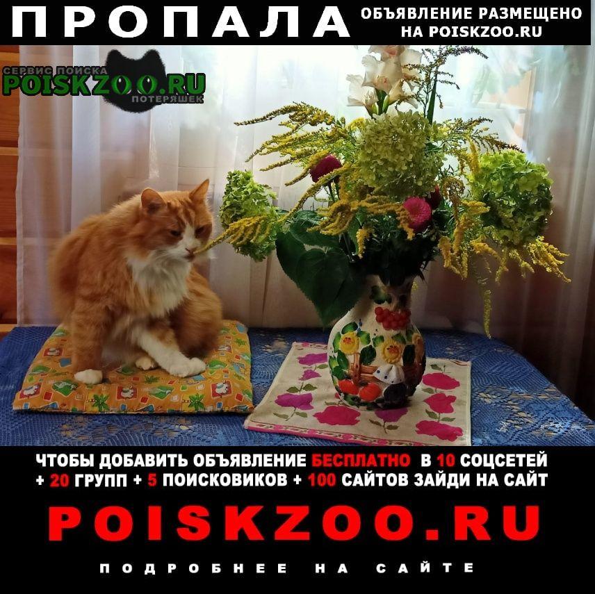 Уфа Пропал кот срочно, прошу помощи в поиске