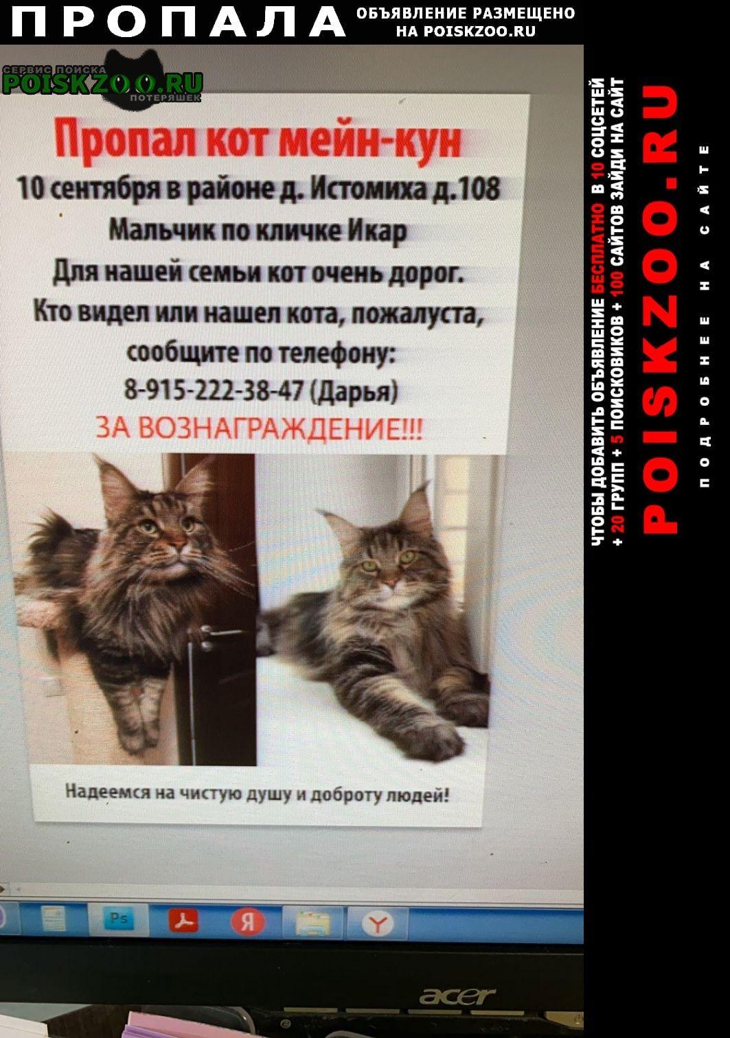 Пропал кот породы мейн-кун Домодедово