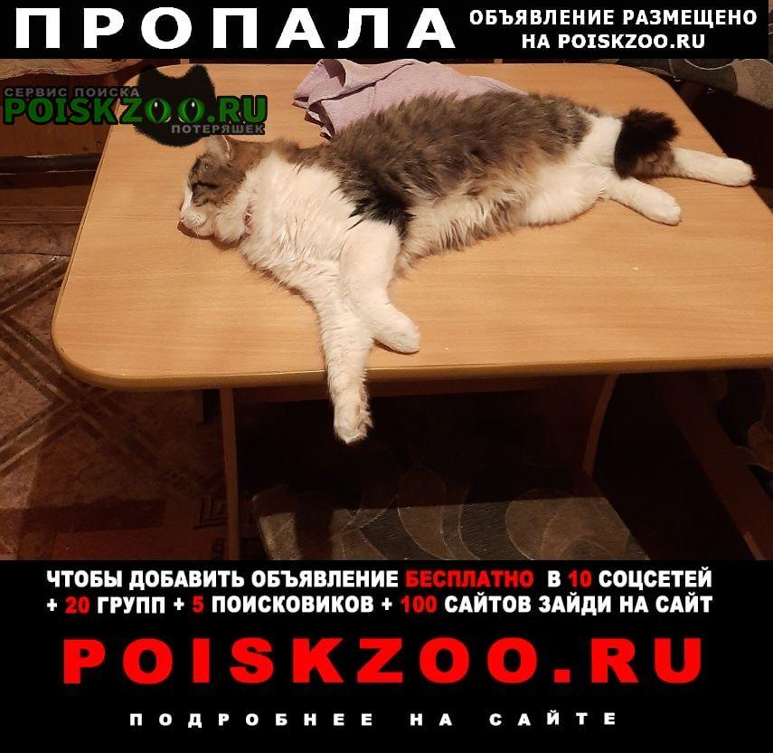 Рыбное Пропал кот
