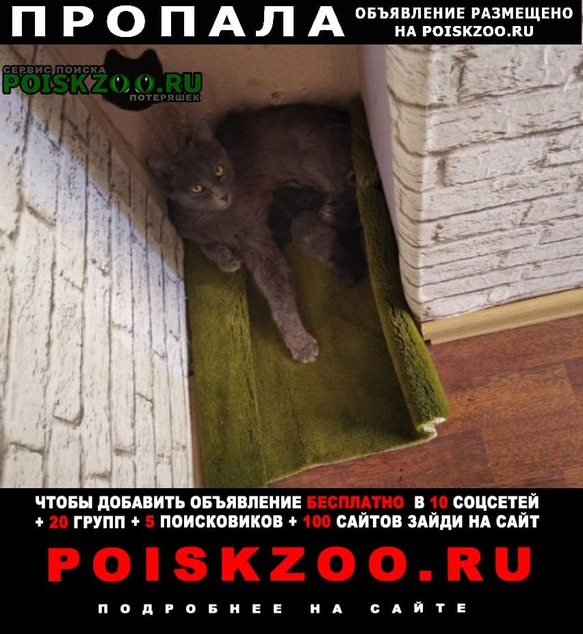 Саратов Пропала кошка за вознаграждение
