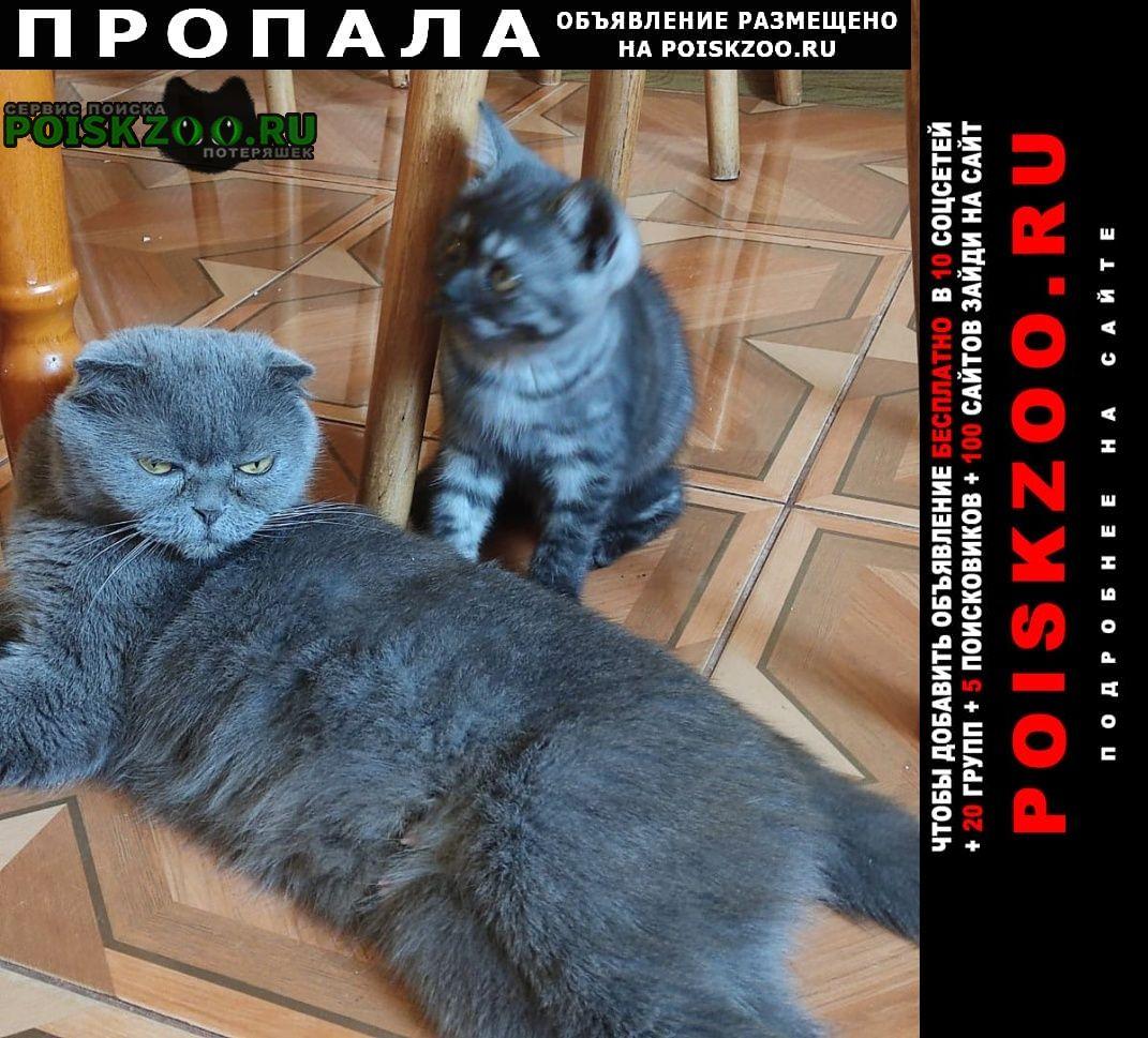 Пропала кошка Родники (Московская обл.)