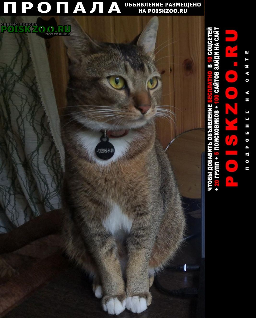 Пропал кот д. качаброво Истра