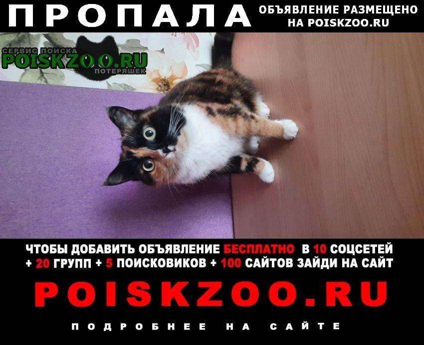 Пропала кошка 13.09 верните пожалуйста Чита