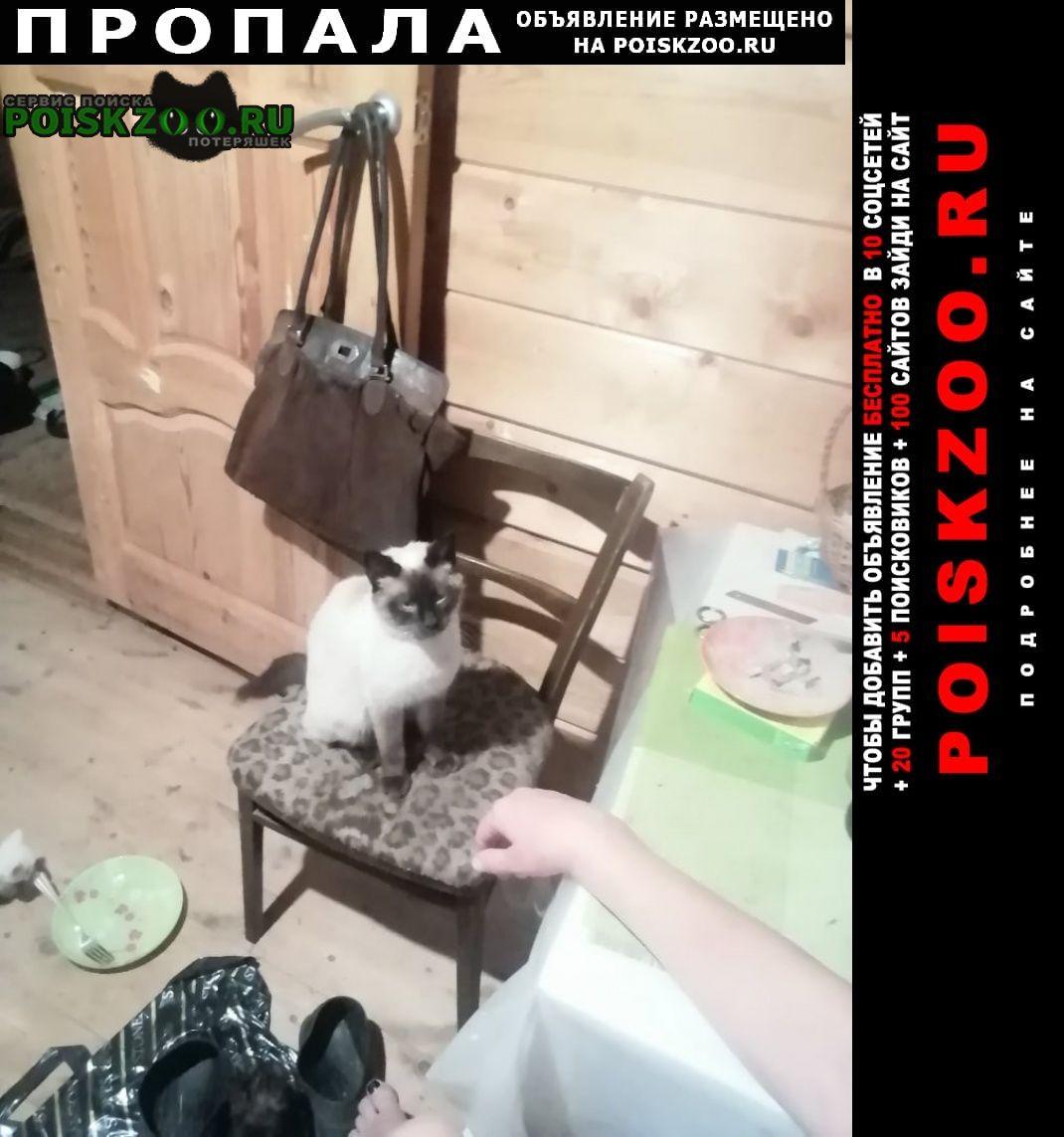 Пропал кот. Боровск