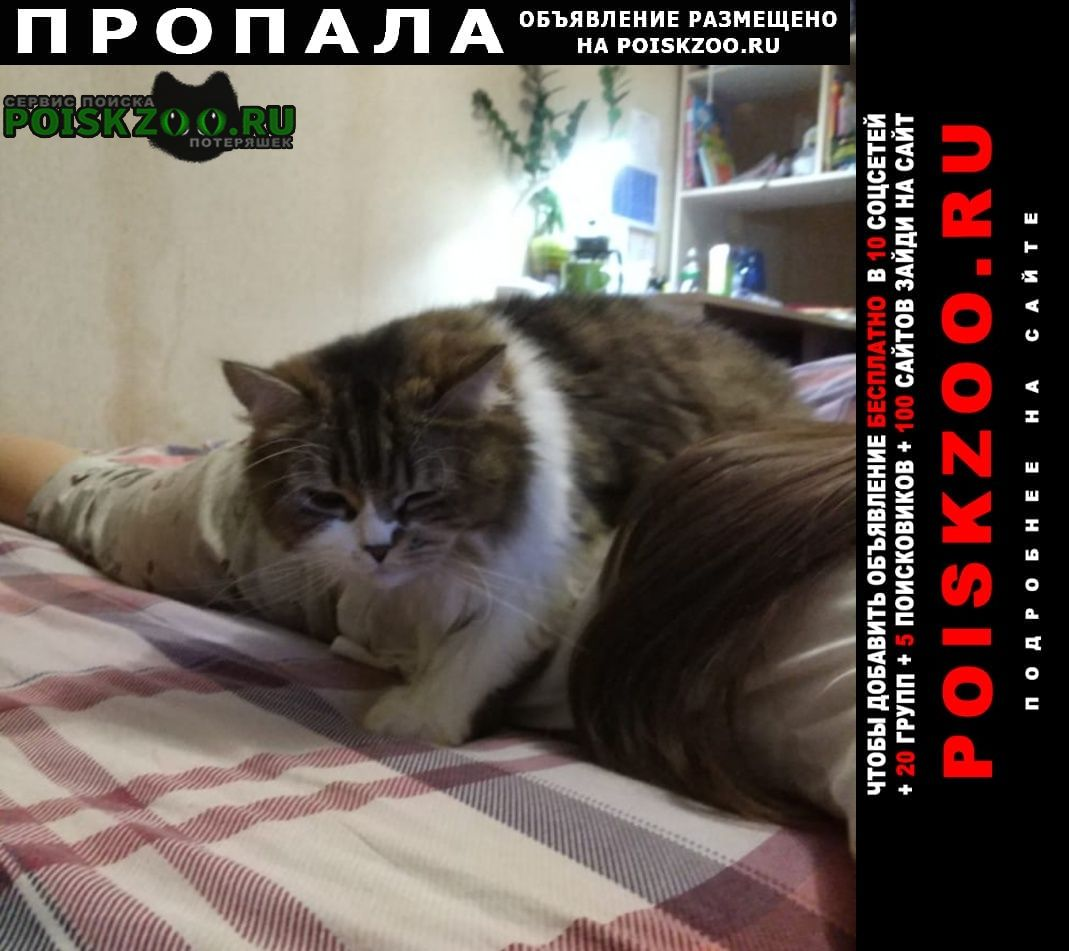 Пропала кошка помогите найти кошку Москва