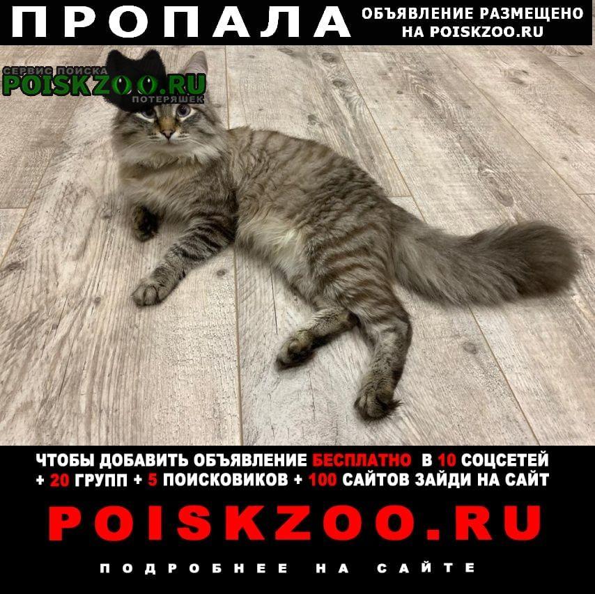 Пропал кот помогите найти Калининград (Кенигсберг)