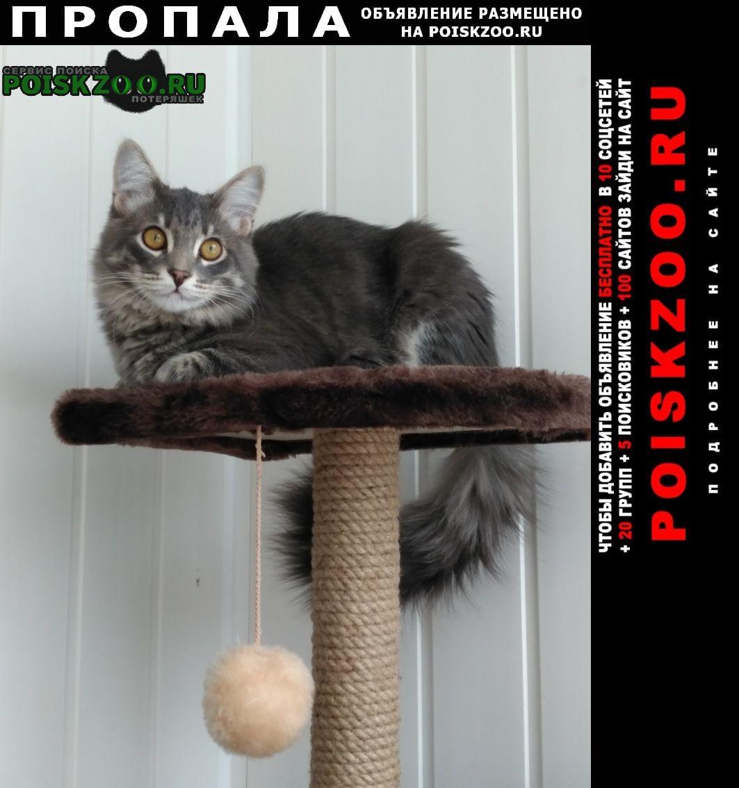 Пропал кот Тольятти
