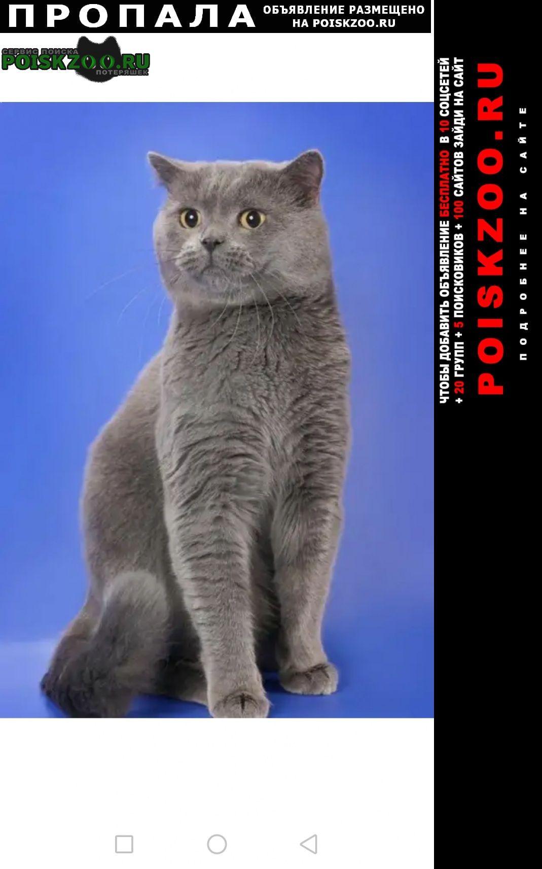 Москва Пропала кошка в жк юрлово